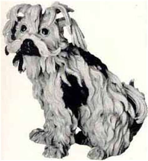 mylad havanese havanese mylad havanese breeder of show quality havanese breed breeds picture