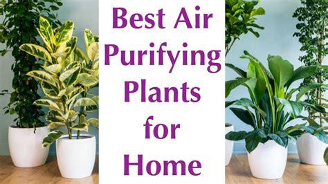 air purifying indoor plants nasa certified