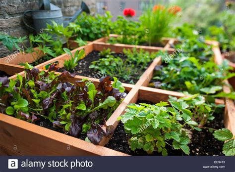 Square Foot Gardening By Planting Flowers Herbs And Square Foot Gardening Flowers