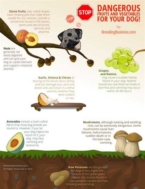 what vegetables are for dogs 10 best food nutrition infographics made
