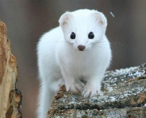 animali piccoli da tenere in casa animali domestici elenco completo idee green