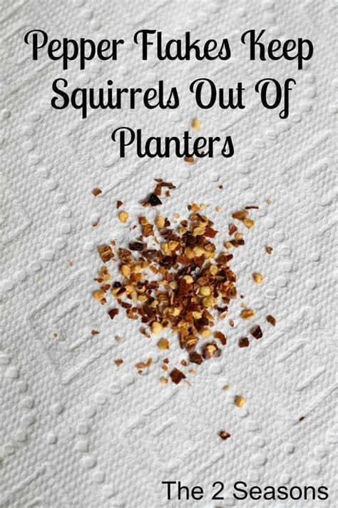 squirrels    planters gardening