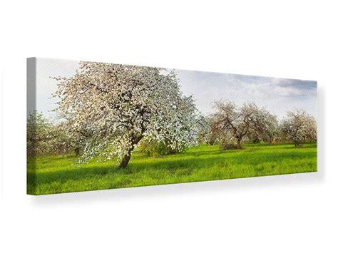 apfelbaum garten leinwandbild panorama apfelbaum garten