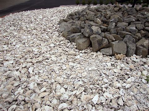 bulk crushed oyster shell and oyster shell flour in bulk