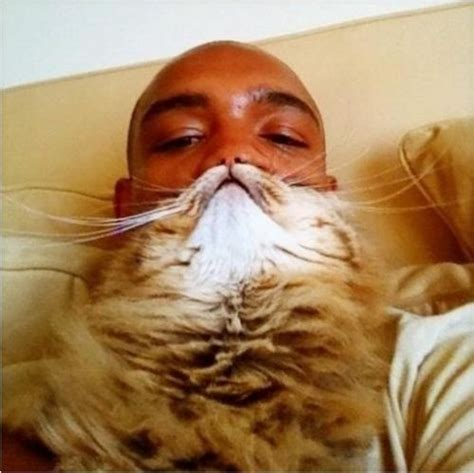 Cat Beard Meme - cat beards meme the most bizarre internet craze yet metro news