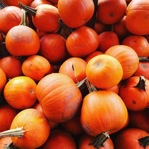 yakima fruit market nursery    reviews