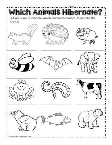 Hibernation Worksheets by Search Results For Hibernation Worksheet Printable