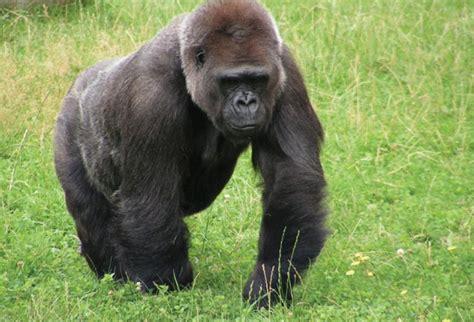 imagenes animales en 10 animales en peligro de extinci 243 n hotbook
