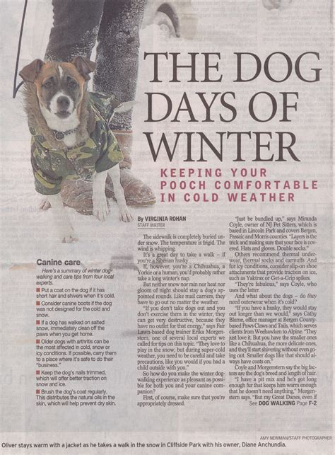 the record newspaper new jersey miranda coyle in the news nj dog walking nj pet sitting