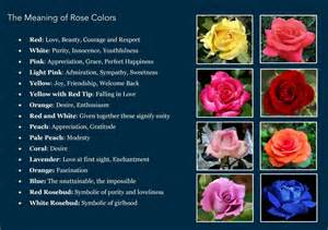meaning of different color roses swadesh colors personality study of color psychological