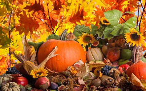 thanksgiving wallpaper for android thanksgiving day wallpaper android apps on play