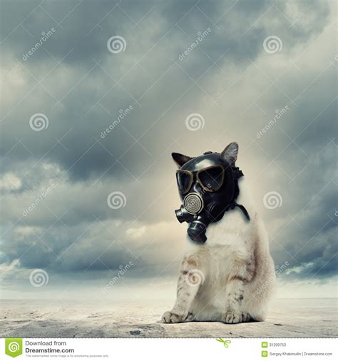 cat in gas mask stock photos image 31209753