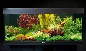 how to set up an aquarium with plastic plants practical