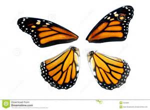 Armchair Warrior Monarch Butterfly Wings Stock Images Image 323484