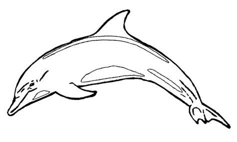 dibujar delfines dibujos para pintar dibujos de delfines para colorear y pintar