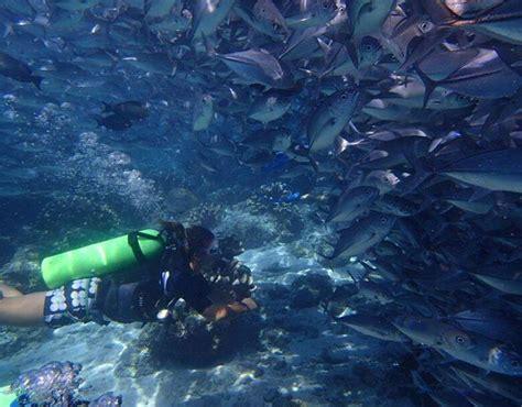 sipadan dive center diving sipadan malaysia sipadan scuba