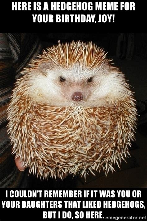 Hedgehog Memes - here is a hedgehog meme for your birthday joy i couldn t remember if it was you or your