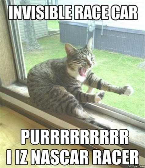 Cat Memes - funny cat memes