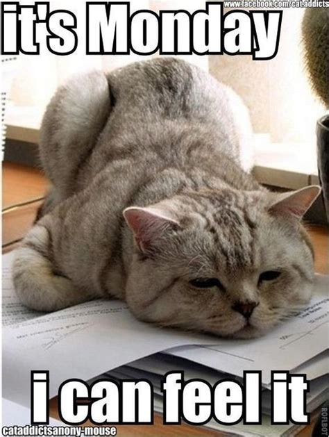 Funny Monday Morning Memes - it s monday funnyanimalslol funny or cute pet memes