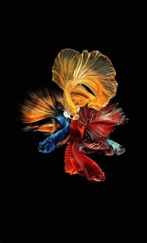 pin oleh ans iqbal iqbal  ikan ikan lukisan abstrak