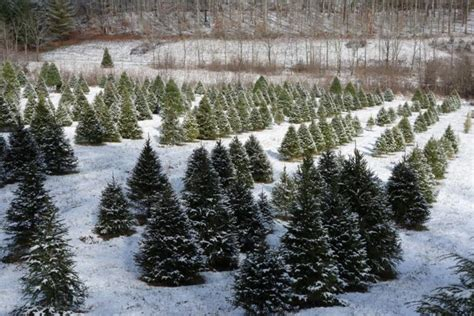 out your own tree at these 10 picture farms in kentucky