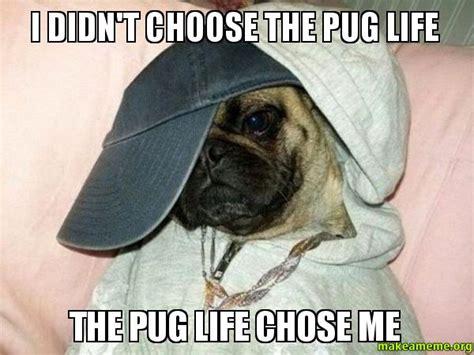 pug chose me i didn t choose the pug the pug chose me make a meme