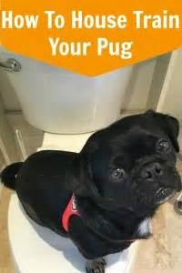 how to house a pug archives mypugnation