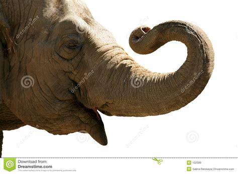 Tete Elephant Profil by Elephant Stock Image Image Of Power
