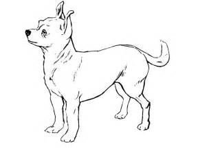 chihuahua coloring pages chihuahua coloring pages and print for free