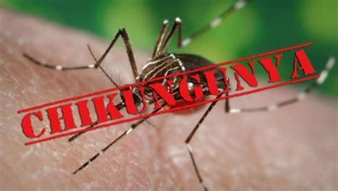 imagenes groseras sobre el chikungunya el chikungunya en am 233 rica el rinc 243 n de pasteur scilogs