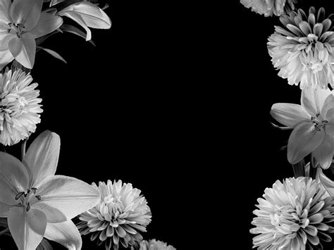 wallpaper black with flowers black and white flower background wallpaper hd wallpaper