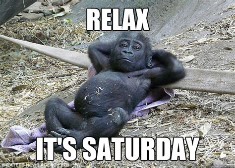 Relaxing Memes - relax its saturday chill gorilla