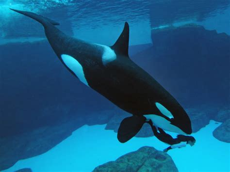 imagenes fondo de pantalla animales solo fondos de pantalla gt animales marinos