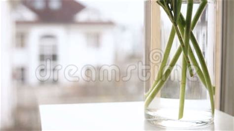 Windowsill Meaning Minimalistic Indoor Flowers Being Put Into The Vase