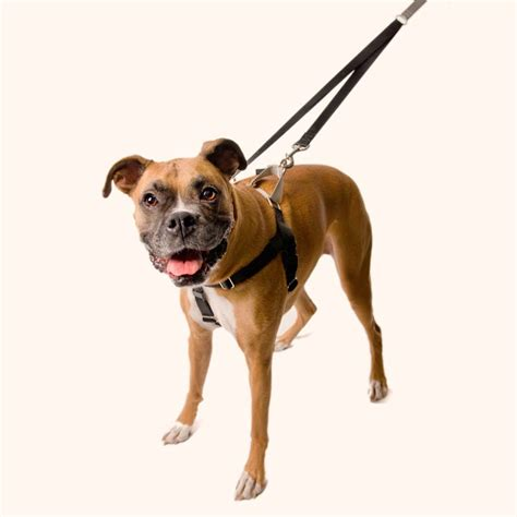 best no pull harness 30 harness ideas for large puppy fallinpets
