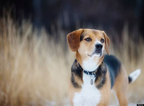 7 Cool Breeds Of Dogs by Some Breeds More Likely To Snag A Date For