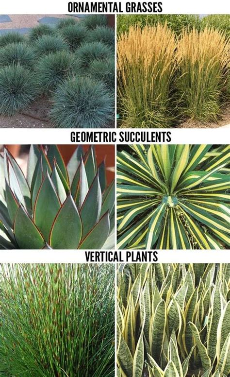 design exle 3 sixteen plants are assigned to 1000 ideas about drought tolerant plants on drought tolerant drought tolerant