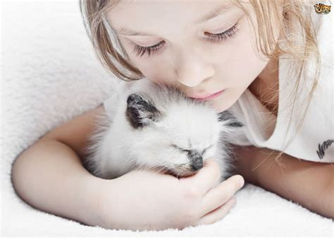 cat child cats and children when to introduce them pets4homes