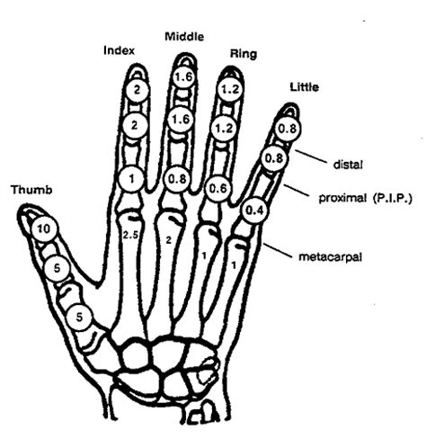 finger diagram diagram of ring finger images how to guide and refrence