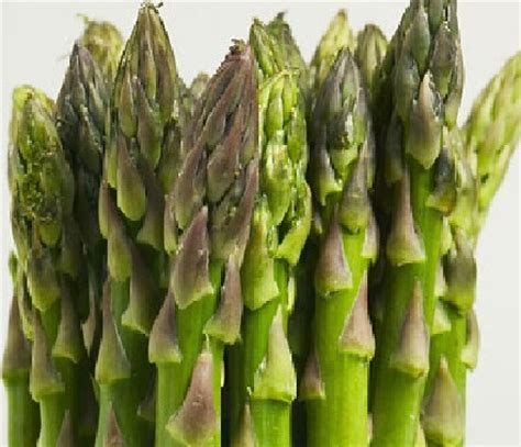 Harga Bibit Asparagus bibit asparagus