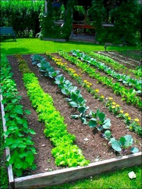 easy vegetable garden layout ideas  beginner