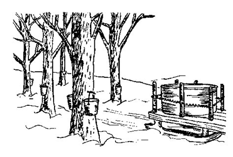 Maple Syrup Colouring Pages Page 2 sketch template