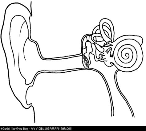 ear anatomy coloring page ear diagram coloring page