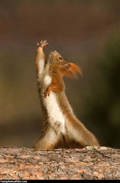 funny animal pictures jazz hands funny animal pictures