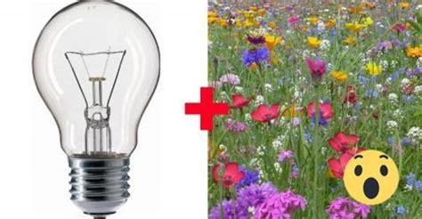 Bilder An Die Wand Kleben 454 by Quot Flowerium Quot Blumen In Der Gl 252 Hbirne Der Trend Aus Japan