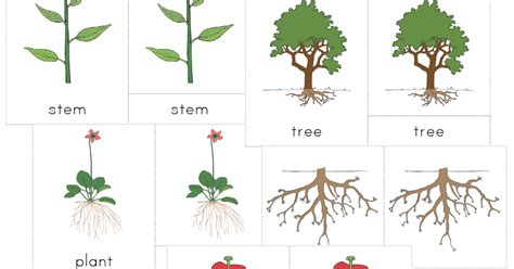 montessori tree printable the helpful garden montessori botany nomenclature set for