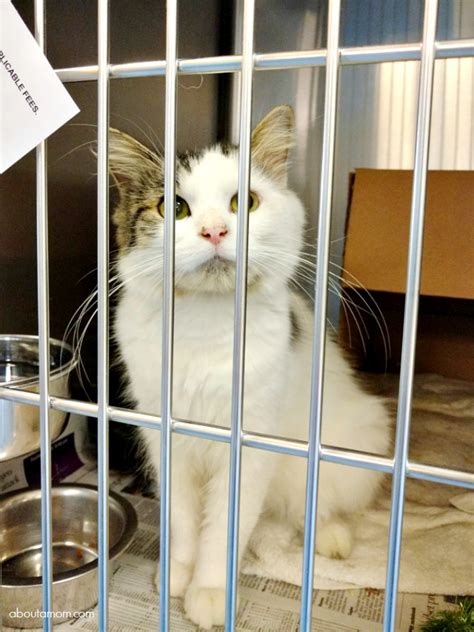 local pound ways to help your local animal shelter or rescue about a