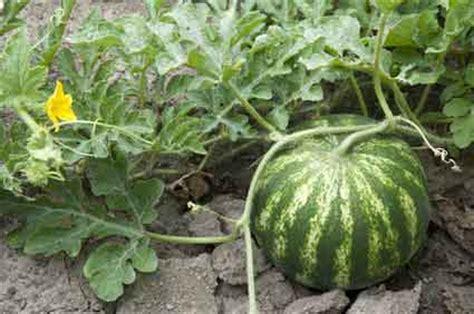 Garten Pflanzen Gute Nachbarn by Gem 252 Se Pflanzen Gute Nachbarn Fruchtfolge Mischkultur