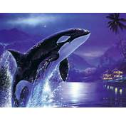 Orca Killer Whale HD Wallpapers Download