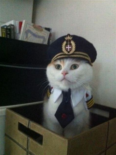 captain cat funny facebook statuses 20 handshakes and captain kitty funny status